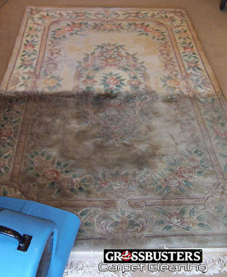 Rug Cleaning Dupont WA